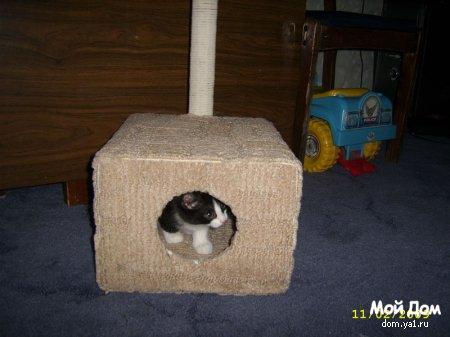"""Домик для кошки """"хэнд мэйд"""""""