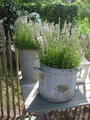 domcreative.ru Контейнерное садоводство с французским колоритом