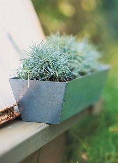 Идеи для контейнерного садоводства